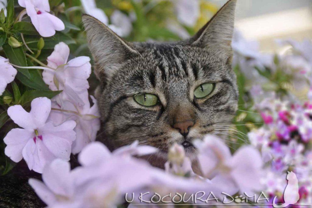 Bachovy květové esence - jsou i pro kočky, psy a další zvířata