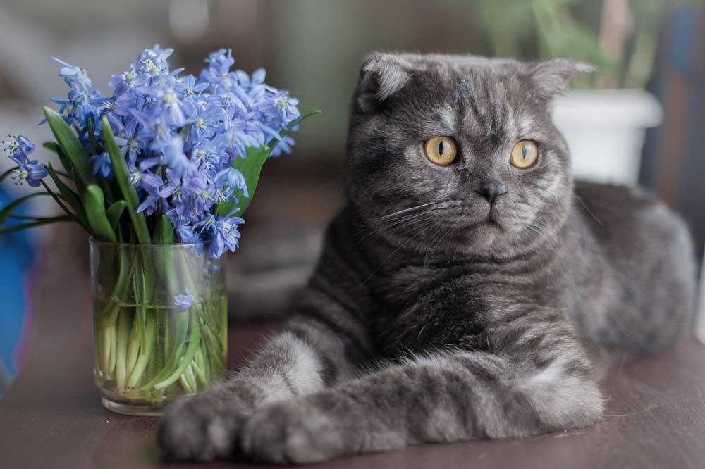 Kočka - květinoterapie