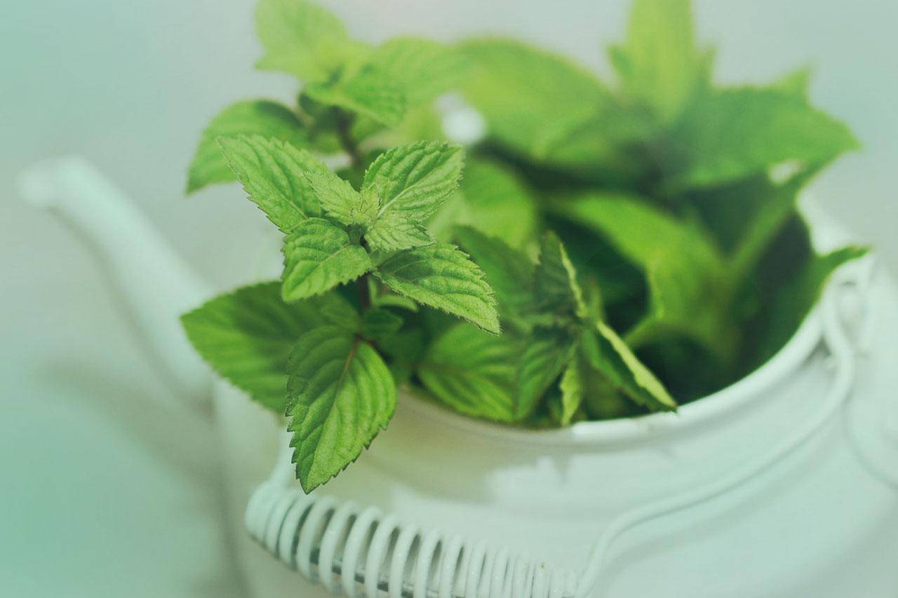 Osvěžující kouzla aromaterapie nejen na léto. Co dokáže máta?