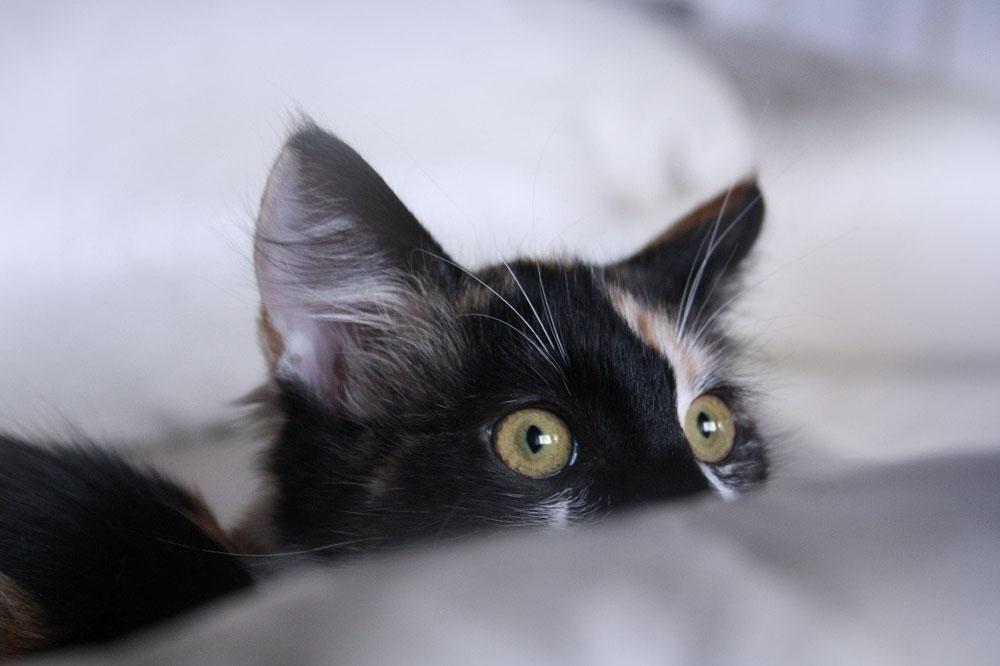 Kočka - krize