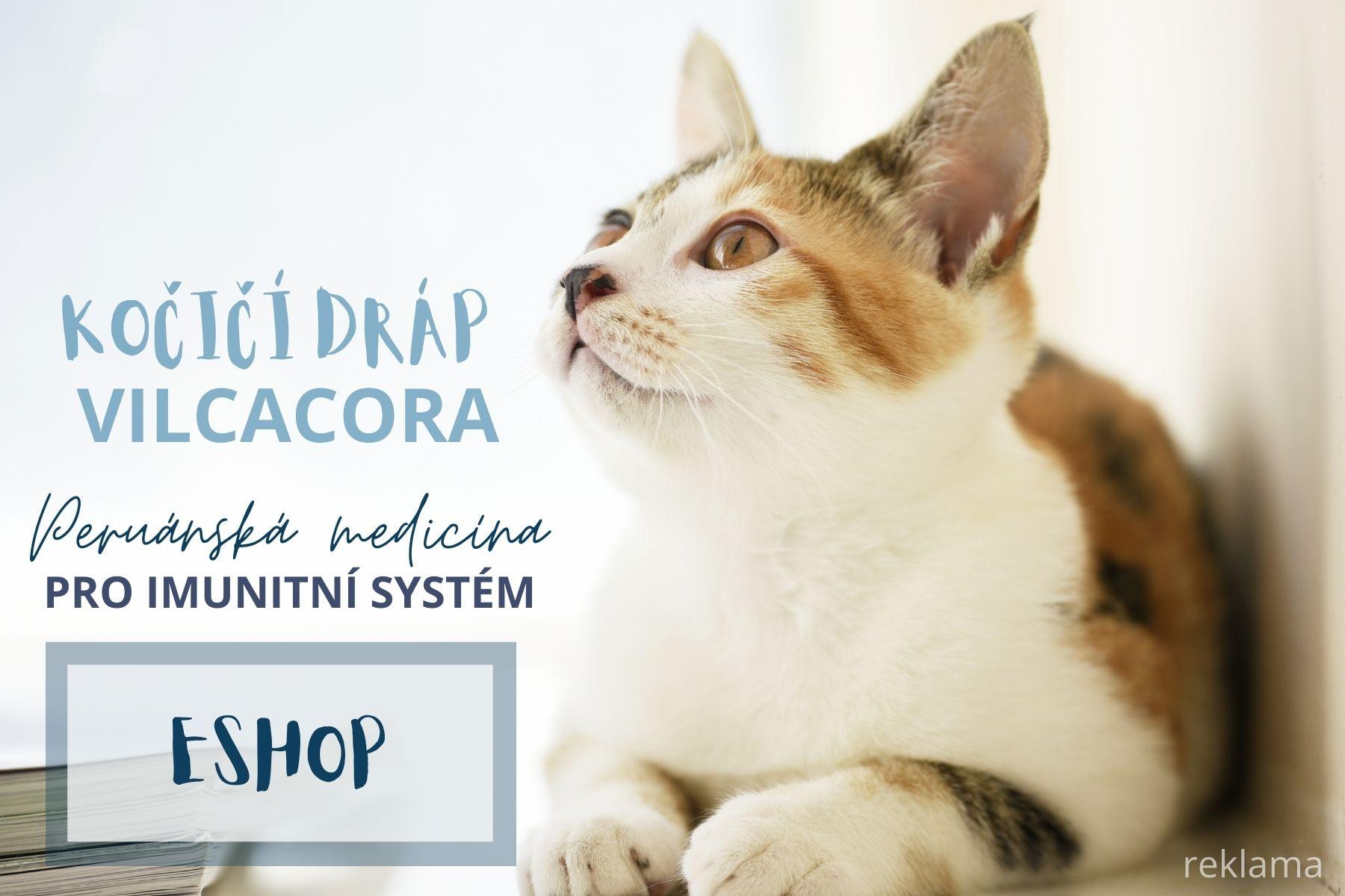 Kočičí dráp, vilcacora