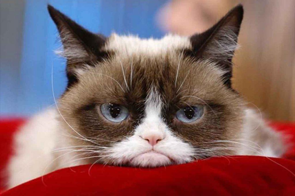 Grumpy Cat – věčně naštvaná kočka, která vydělává miliony