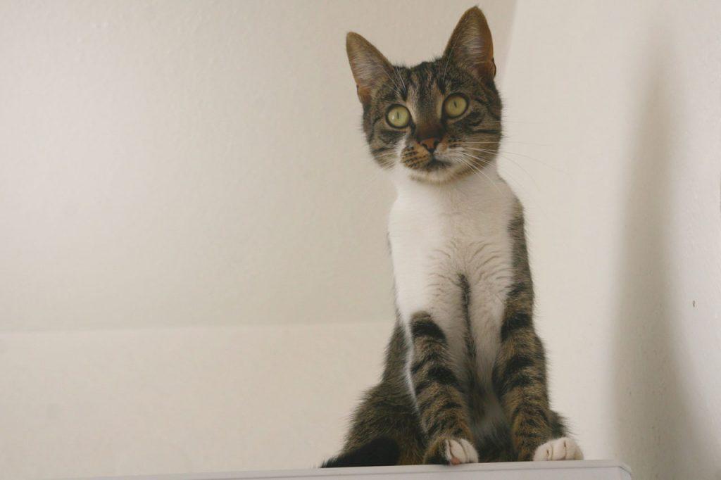 Každá kočka je tak trochu potvora – anebo ne?