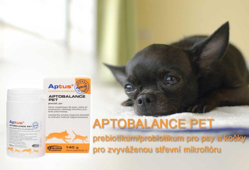 Probiotikum pro psy a kočky