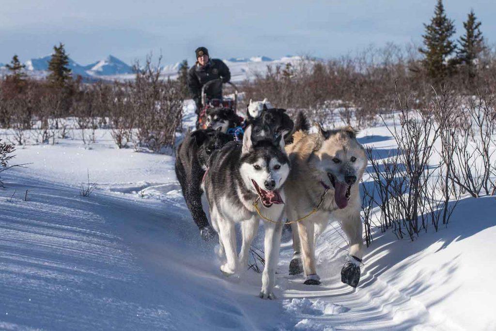 Mushing neboli psí spřežení – druh přepravy, sport i způsob života