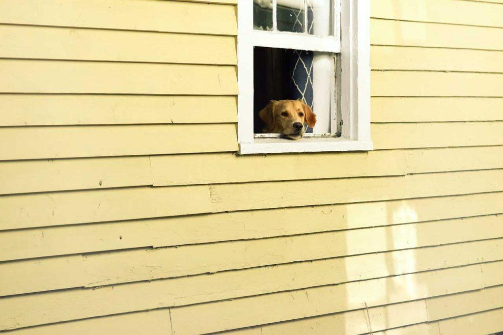 Větrání, otevřená okna