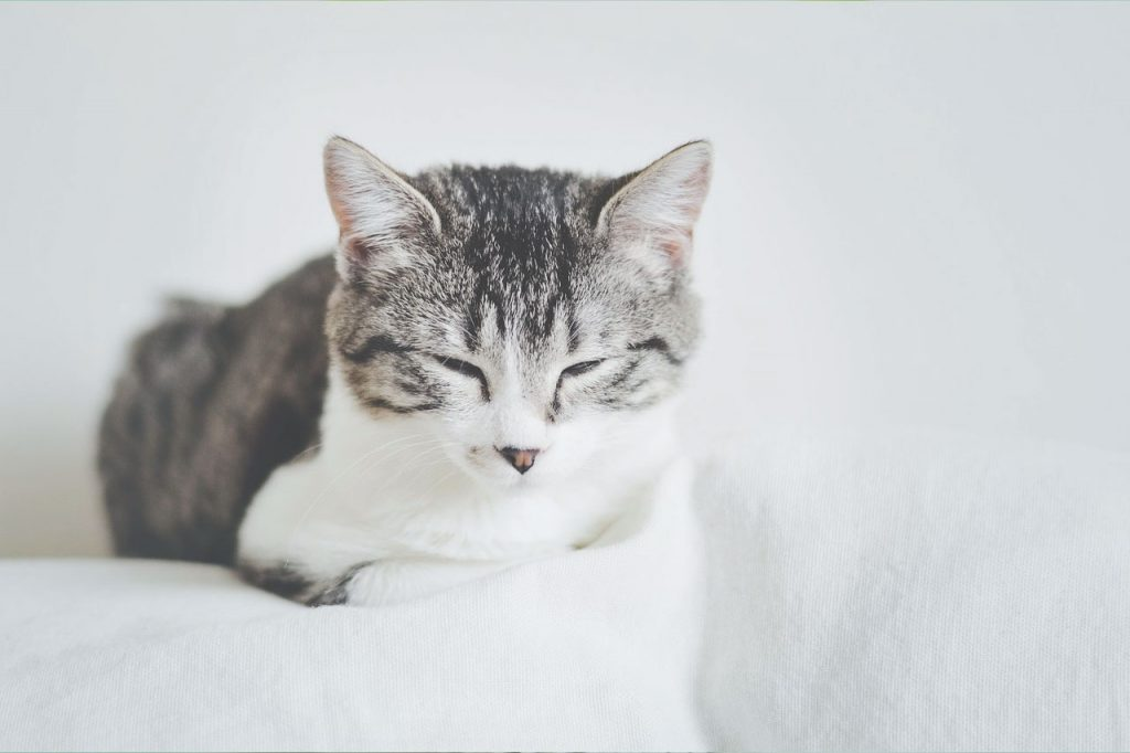 Kočka jako zen mistr
