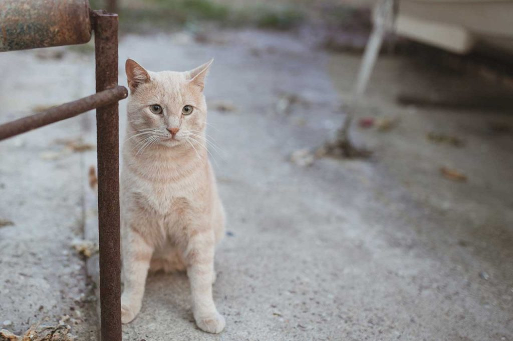 Pohlaď kočku, když ji potkáš na ulici