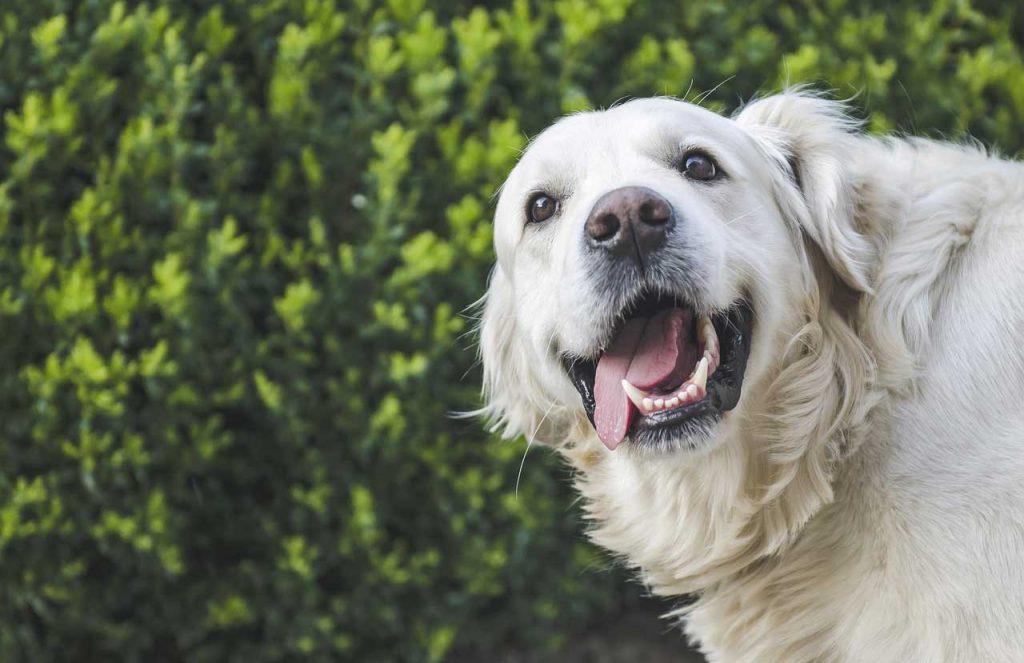 Holistické granule pro psy