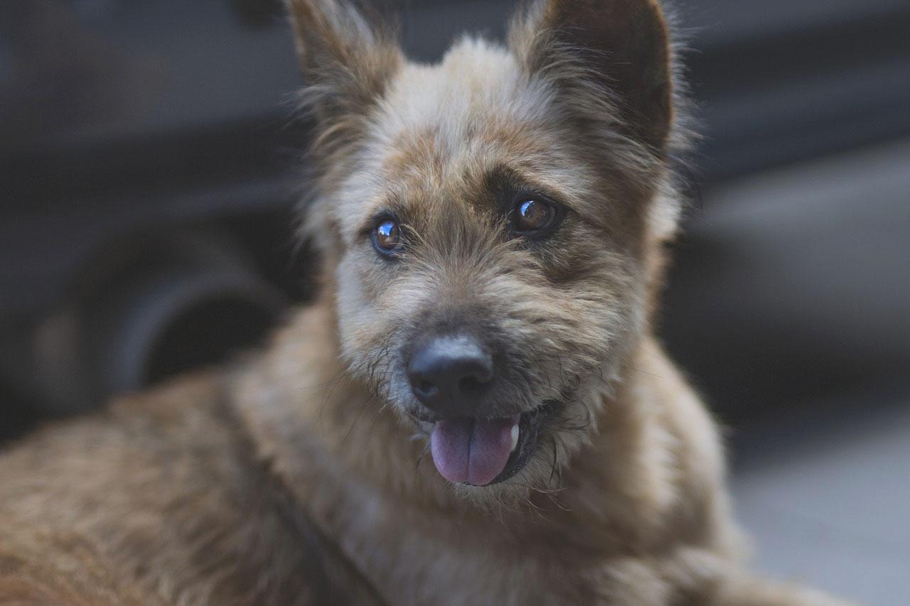 26. srpen: Mezinárodní den psů