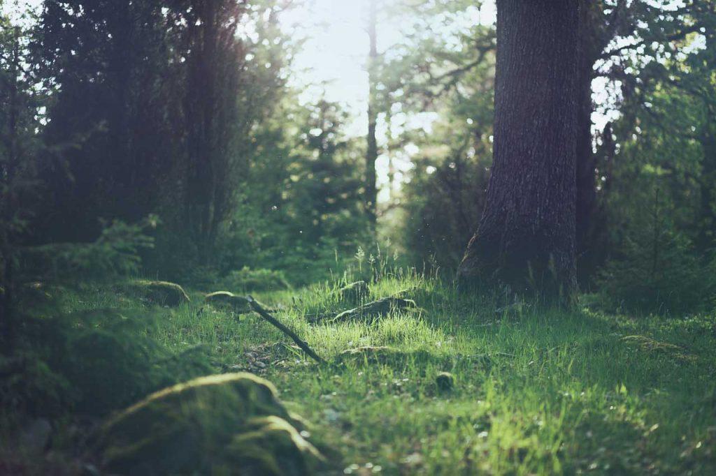 Aktivita klíšťat - les