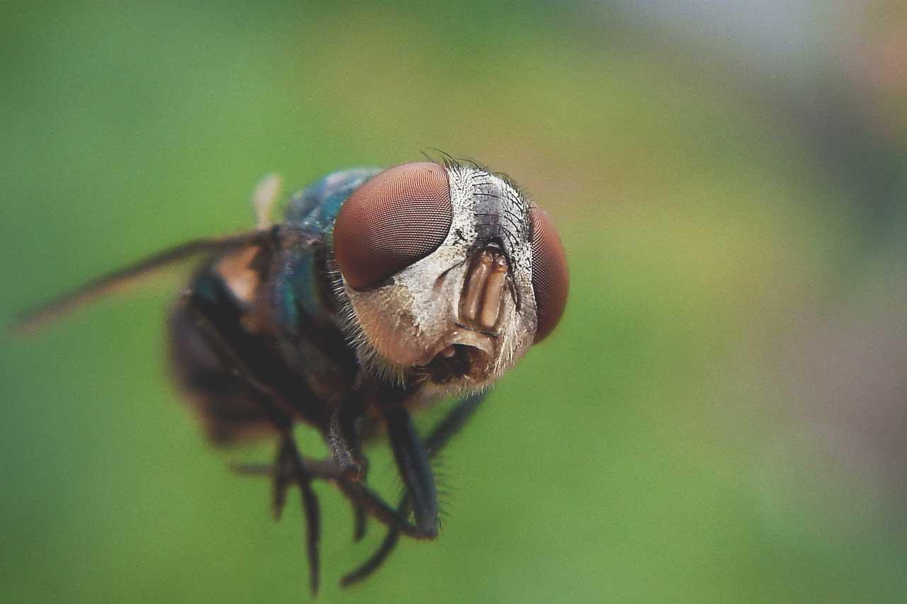Přírodní repelenty proti hmyzu, obtížný hmyz