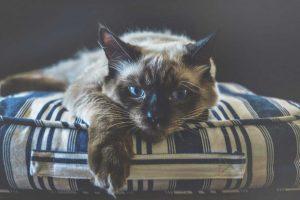 Kočka v bytě