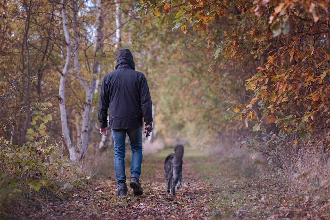 Podzim je zkouška imunity. Nevyhne se jí ani pes. Jak obstát?