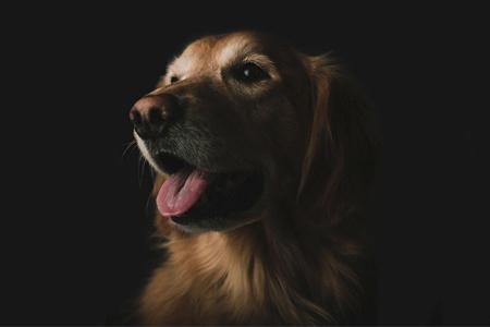 Pes - krmivo, české granule