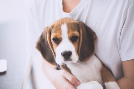 Pes v náručí