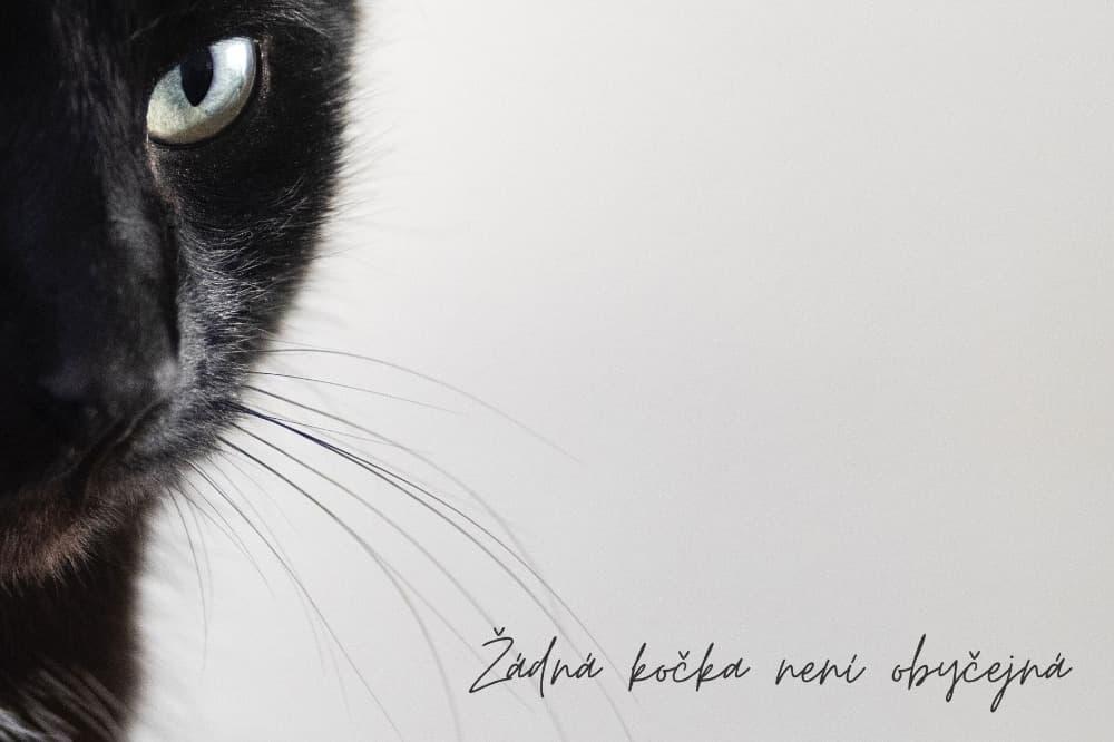 Žádná kočka není obyčejná