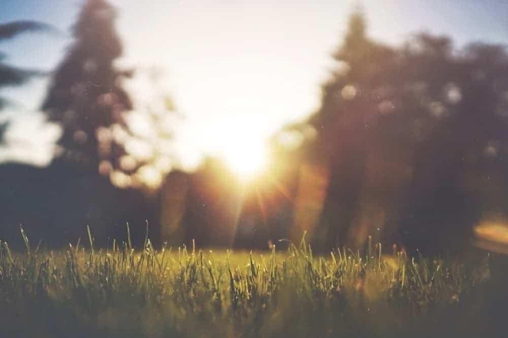 Klíšťata v trávě