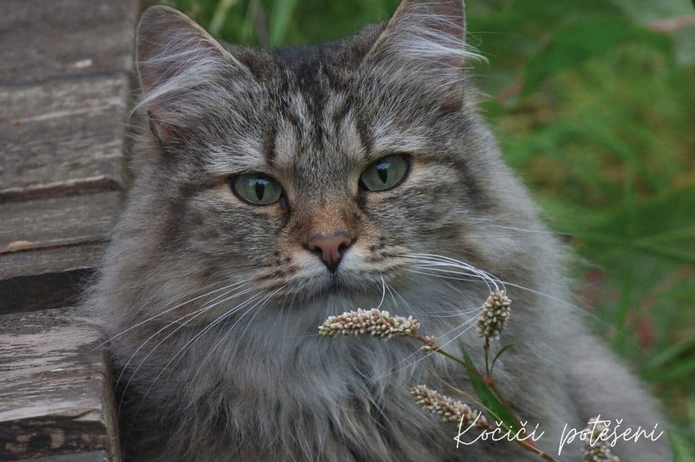 Kočka, bylinky