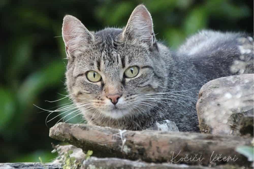 Kočka, tráva