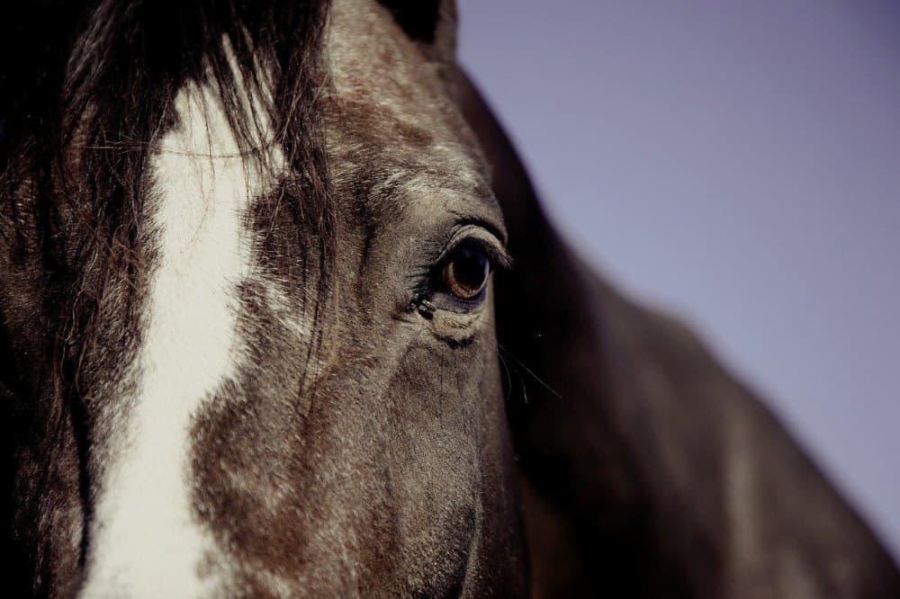 Kůň, den zvířat
