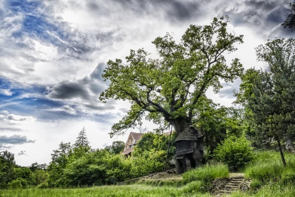 Žižkův dub